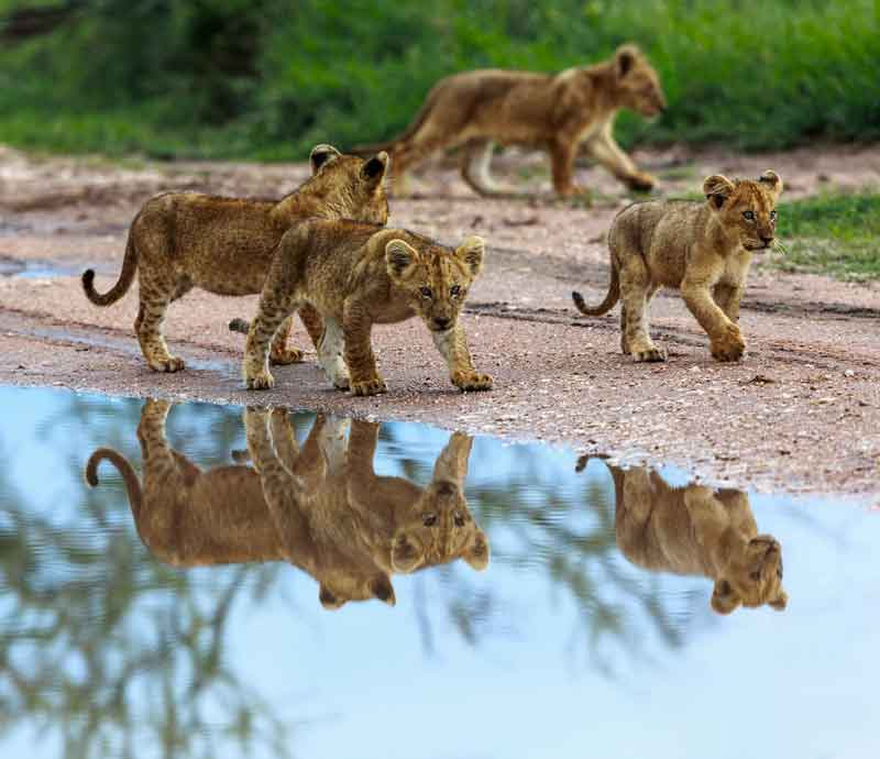 タンザニア画像